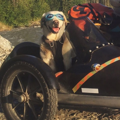 Girl-and-Dog-Travel-North-America-on-Motorcycle-Sidecar1__880