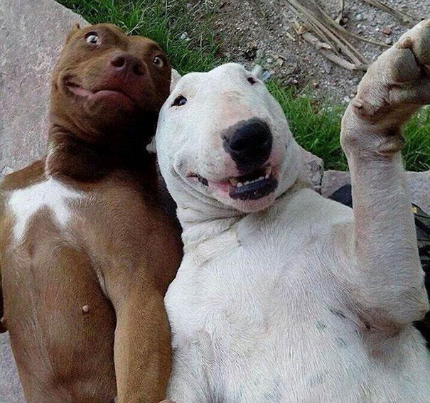 funny-animal-selfies-41-587deb82d874d__605