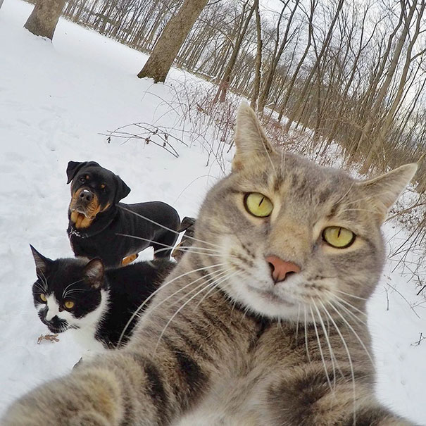 funny-animal-selfies-68-587e26ed2ad50__605